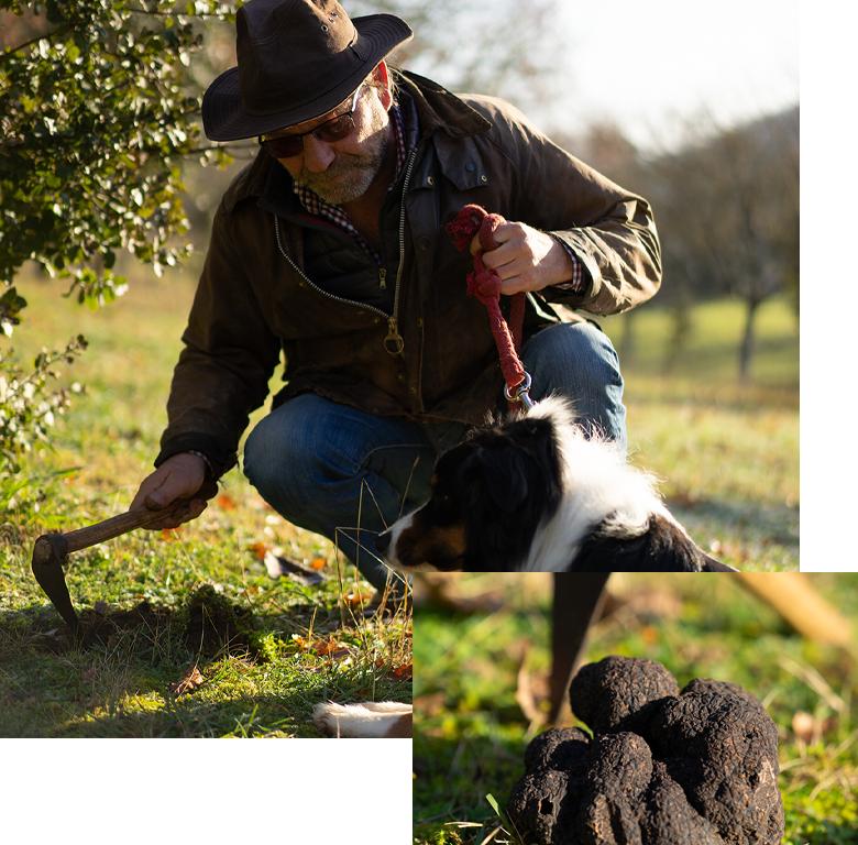 Cavage-truffe-noire